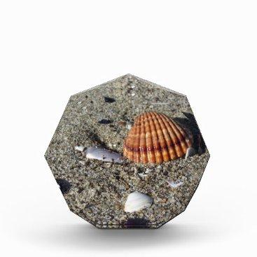 Beach Themed Seashells on sand Summer beach background Top view Acrylic Award