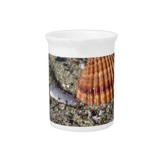 Seashells on sand Summer beach background Top view Beverage Pitcher