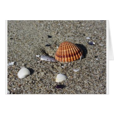 Beach Themed Seashells on sand Summer beach background Top view Card