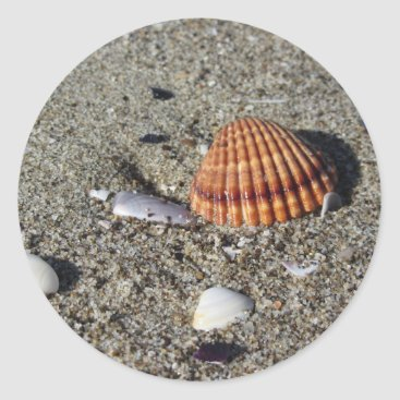 Beach Themed Seashells on sand Summer beach background Top view Classic Round Sticker