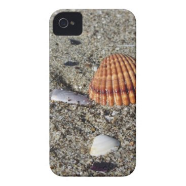 Beach Themed Seashells on sand Summer beach background Top view iPhone 4 Cover