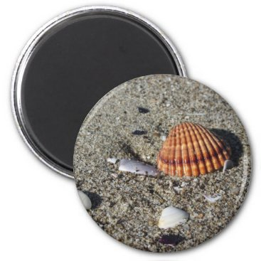 Beach Themed Seashells on sand Summer beach background Top view Magnet