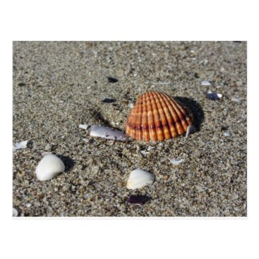 Beach Themed Seashells on sand Summer beach background Top view Postcard