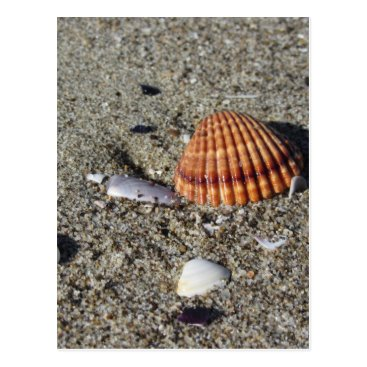 Beach Themed Seashells on sand Summer beach background Top view Postcard