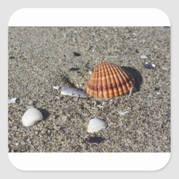 Beach Themed Seashells on sand Summer beach background Top view Square Sticker