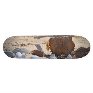Seashells on the Beach by Shirley Taylor Skateboard Deck