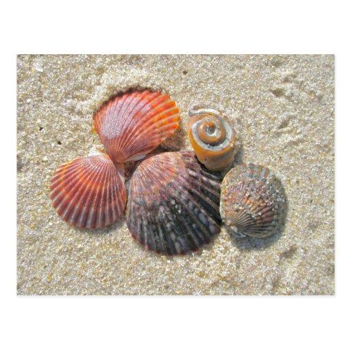 Seashells on the Beach Coordinating Items Postcard