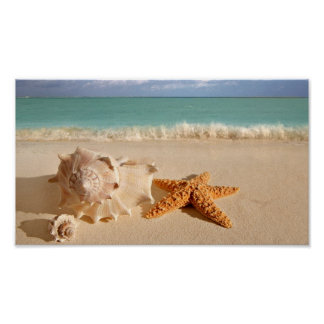 Seashells on the beach poster
