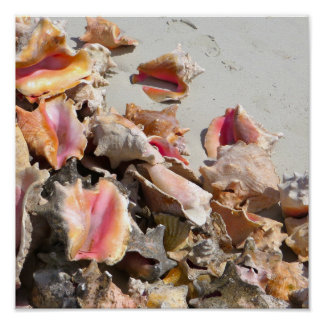 Seashells on the Beach | Turks and Caicos Photo Poster