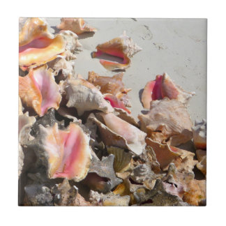 Seashells on the Beach | Turks and Caicos Photo Tile