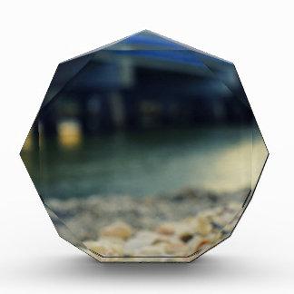 Seashells on the Seashore Award