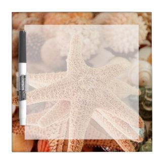Seashells para la venta Zihuatanejo, México Pizarra Blanca
