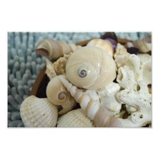 ¡Seashells! Arte Fotográfico