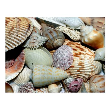 Beach Themed Seashells Photography Sanibel Island Florida Shell Postcard