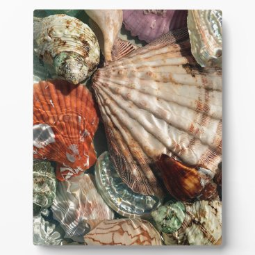 Beach Themed Seashells Plaque