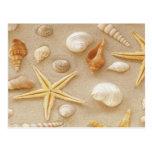 Seashells por la costa postal