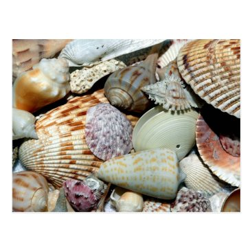 Beach Themed seashells postcard