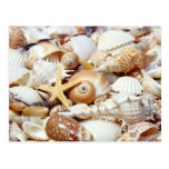 Seashells Postcards