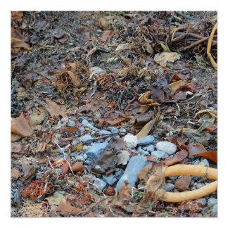 seashells, rocks and algae on beach Victoria BC Poster