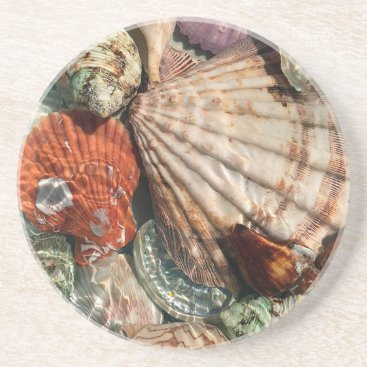 Beach Themed Seashells Sandstone Coaster