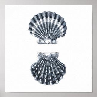 Seashells Sealife Group12A print#4 beach decor art Poster