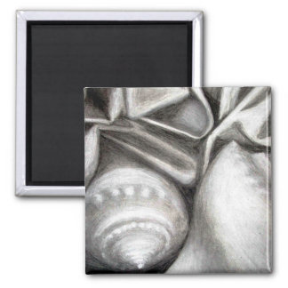 Seashells Shells Black & White Charcoal Drawing Magnet