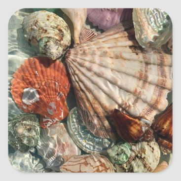 Beach Themed Seashells Square Sticker