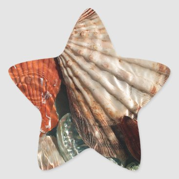 Beach Themed Seashells Star Sticker