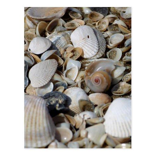 Seashells Tarjeta Postal