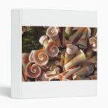 Seashells tropicales