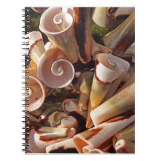 Seashells tropicales libro de apuntes con espiral
