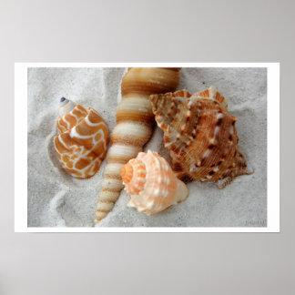 seashells white sand i poster