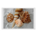 seashells white sand i posters
