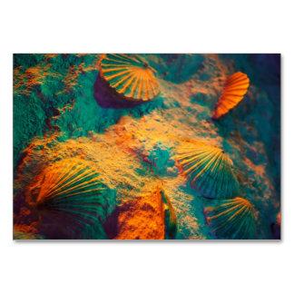 Seashells y arena