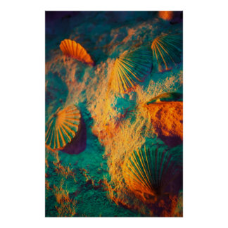 Seashells y arena posters