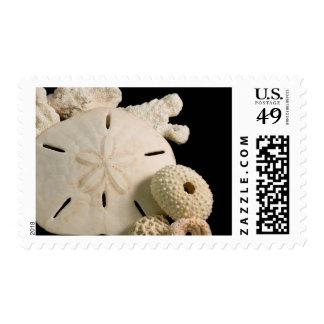 Seashells y dólar de arena blancos estampilla