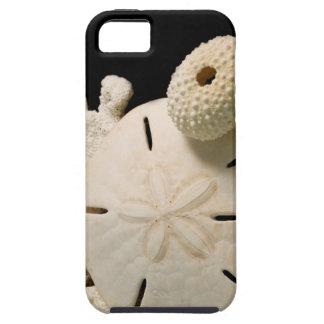 Seashells y dólar de arena blancos funda para iPhone SE/5/5s