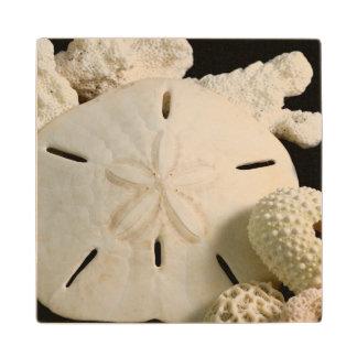 Seashells y dólar de arena blancos posavasos de madera