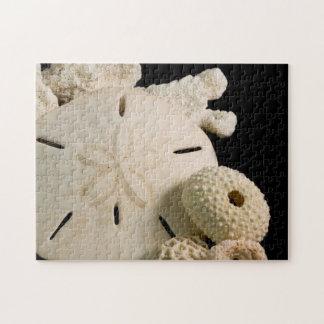 Seashells y dólar de arena blancos puzzles con fotos