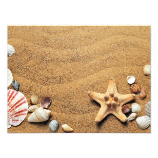 Seashells y estrellas de mar en la playa fotografía