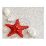 seashells y estrellas de mar postal