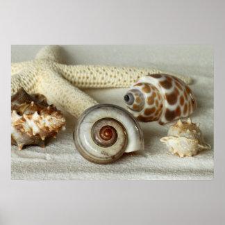Seashells y poster de la playa de las estrellas de
