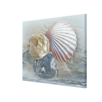Seashells y resaca impresión en lienzo estirada
