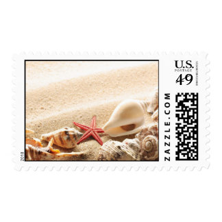 Seashells y sello de las estrellas de mar