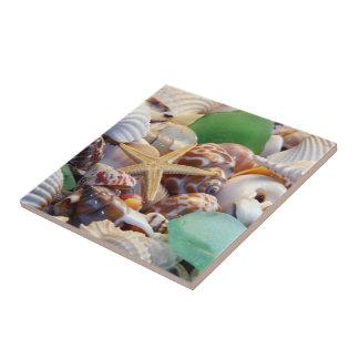 Seashells y teja de las estrellas de mar