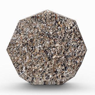 Seashore of shells and stones closeup acrylic award