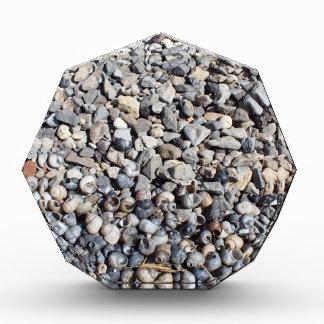 Seashore of shells and stones closeup award