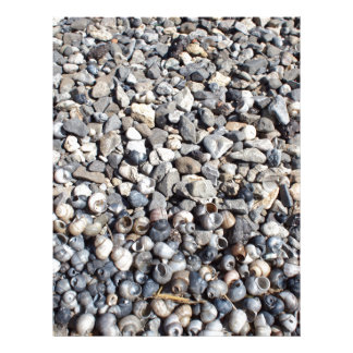 Seashore of shells and stones closeup letterhead