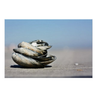 Seashore Seashells Poster