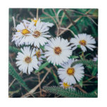 """Seaside Daisies   Ceramic Photo Tile<br><div class=""""desc"""">A customizable ceramic photo tile featuring an original closeup nature photograph of white seaside daisies,  taken along the Northern California coast. Click &quot;Customize it!&quot; to add text.</div>"""